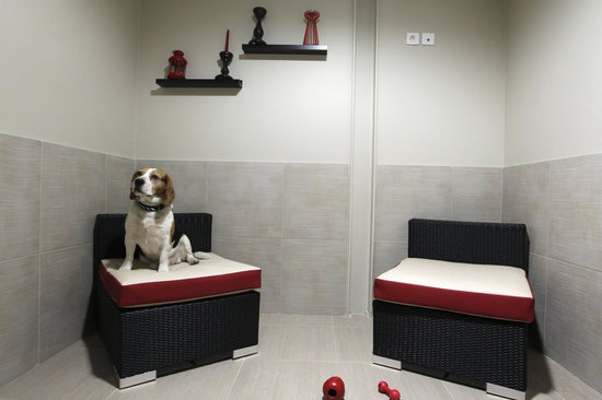 Actuel dogs nec plus ultra du luxe canin firstluxe for Best hotels for pets