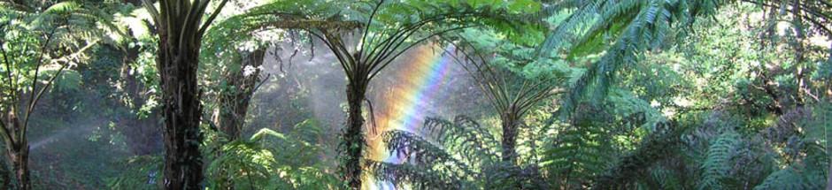 La-vegetation-humide-du-Rayol