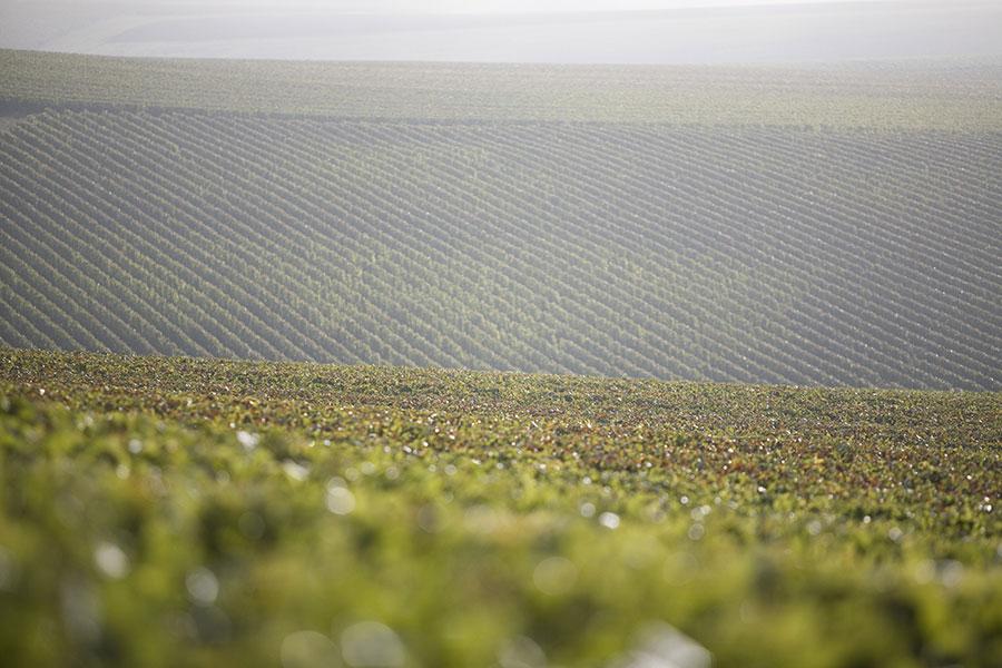 Chassenay-d'Arce-vignes-20